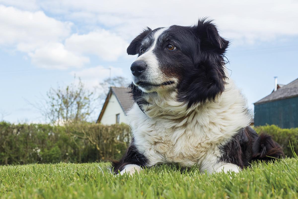 sndrome de disfuncin cognitiva en perros