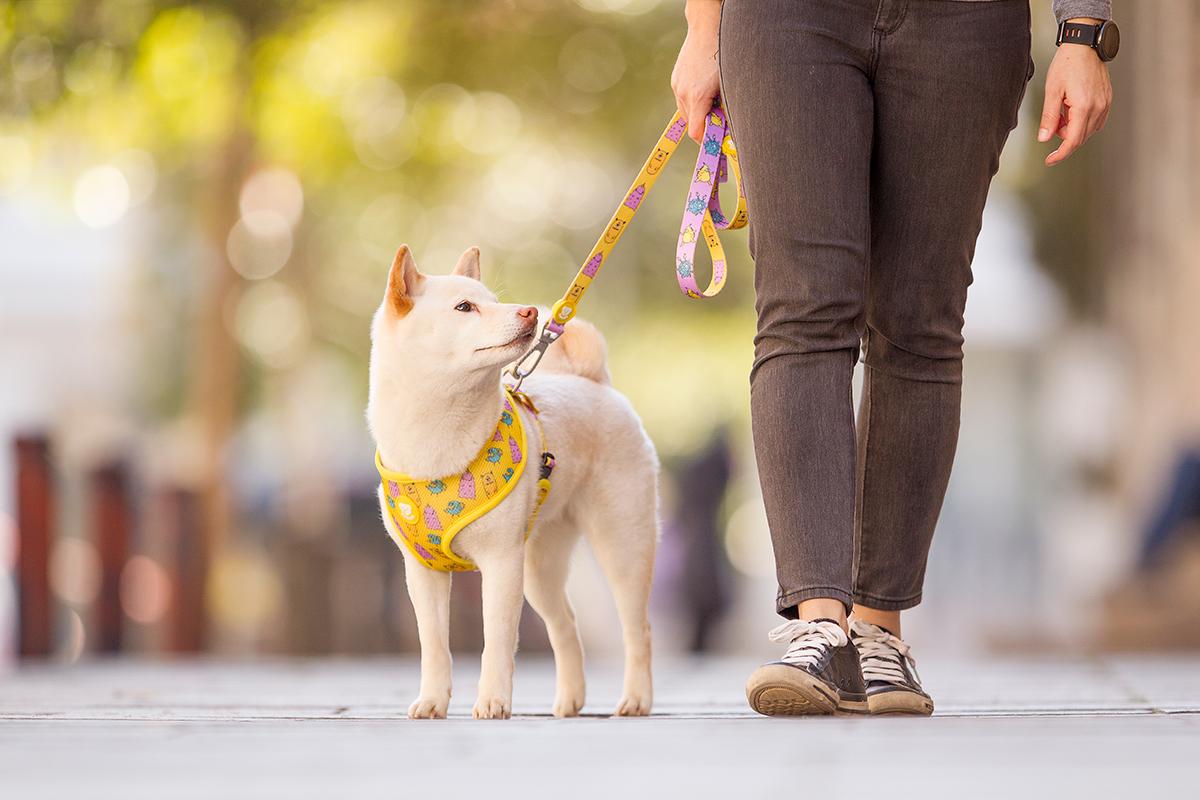 dukier la marca espaola de accesorios de diseo para perros