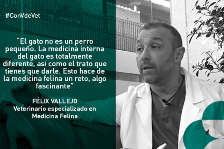 felix-vallejo-habla-de-medicina-felina-en-con-v-de-vet