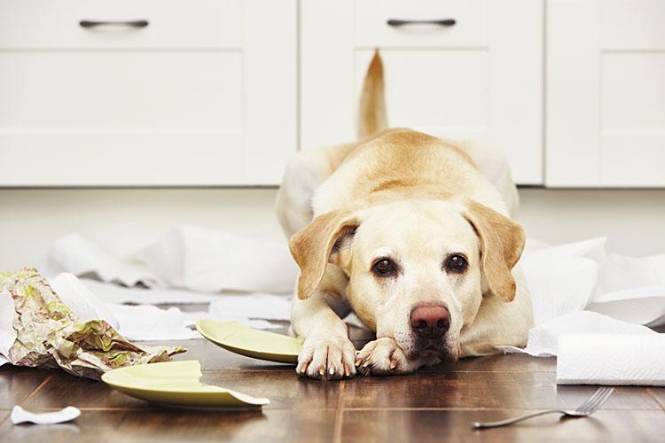 la-etologia-es-la-gran-aliada-de-veterinarios-y-propietarios