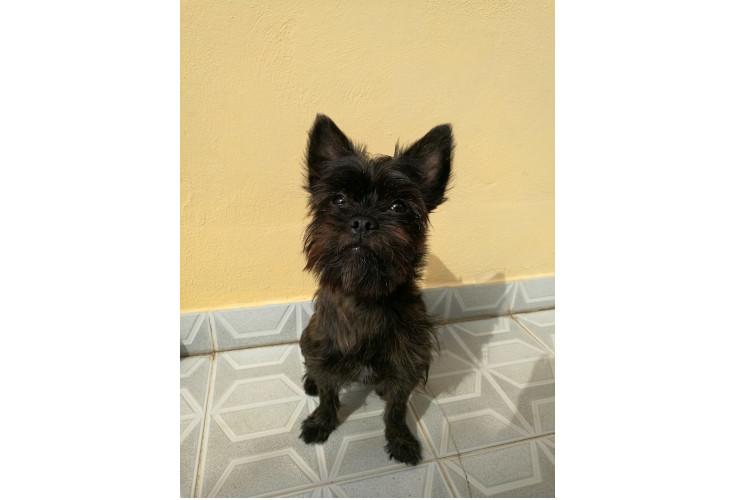 anicura-implanta-un-marcapasos-a-un-perro-de-10-meses