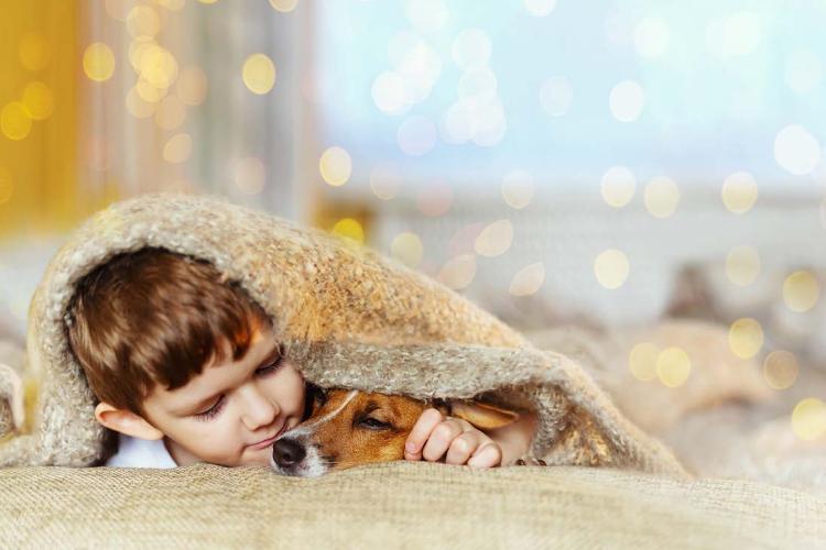 los-espanoles-cada-vez-compran-mas-mascotas-y-adoptan-menos