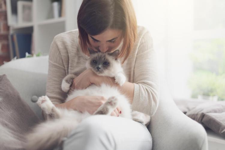como-calmar-a-un-gato-con-estres-o-ansiedad