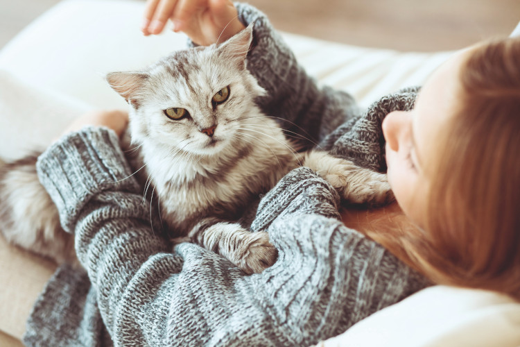 el-primer-paso-es-reconocer-la-etologia-felina-como-medicina-del-com