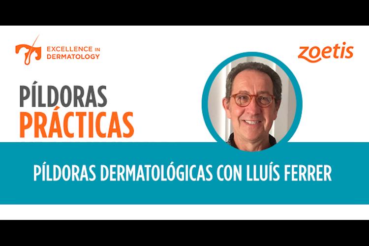 zoetis-inicia-una-serie-de-pildoras-dermatologicas-con-el-experto-ll
