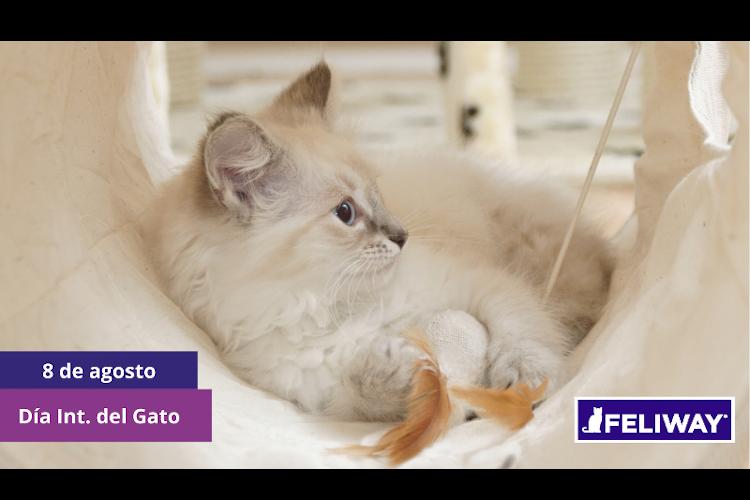 los-amantes-de-los-gatos-tienen-una-cita-para-recordar-el-bienestar-fe