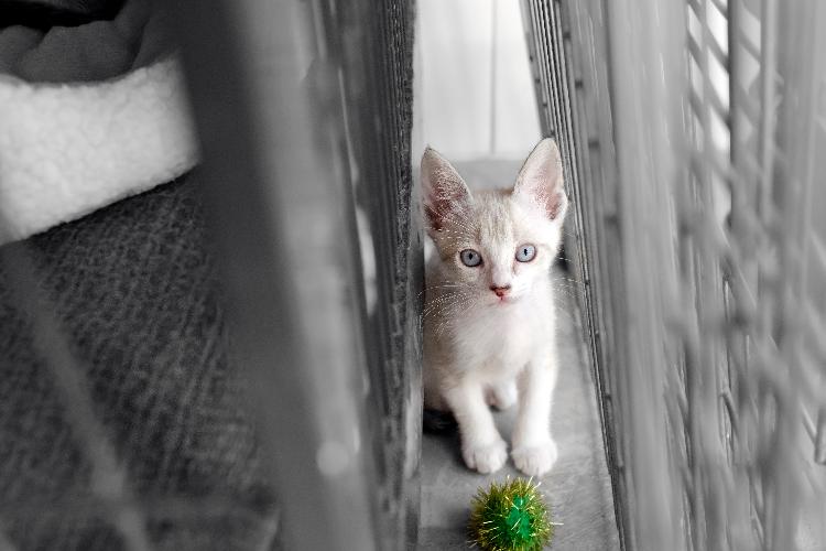 8-maneras-sorprendentes-de-tu-gato-de-decirte-que-te-quiere