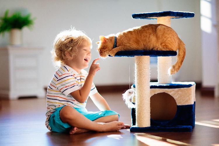 5-maneras-para-tranquilizar-a-tu-gato