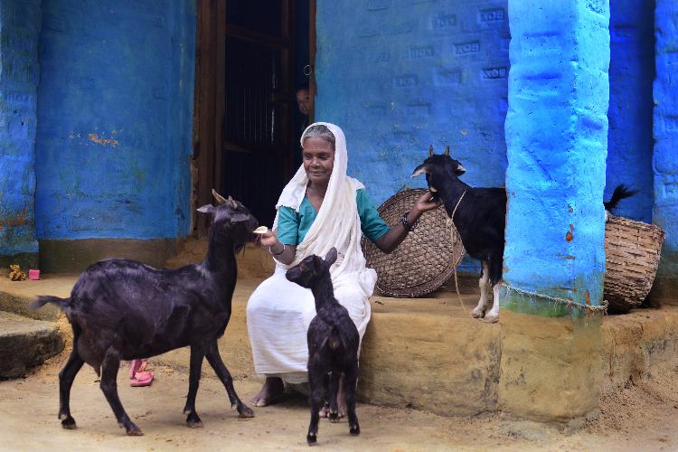 gbads-el-nuevo-programa-mundial-sobre-la-carga-de-las-enfermedades-an
