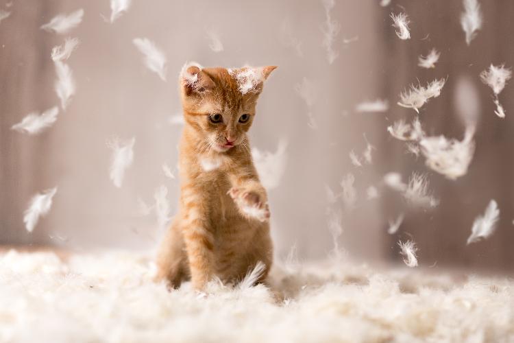 el-punto-de-vista-de-un-gato-gatos-independientes