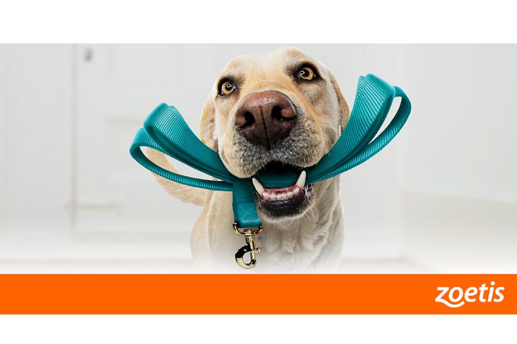 zoetis-sigue-apostando-por-la-formacion-en-dermatologia-veterinaria