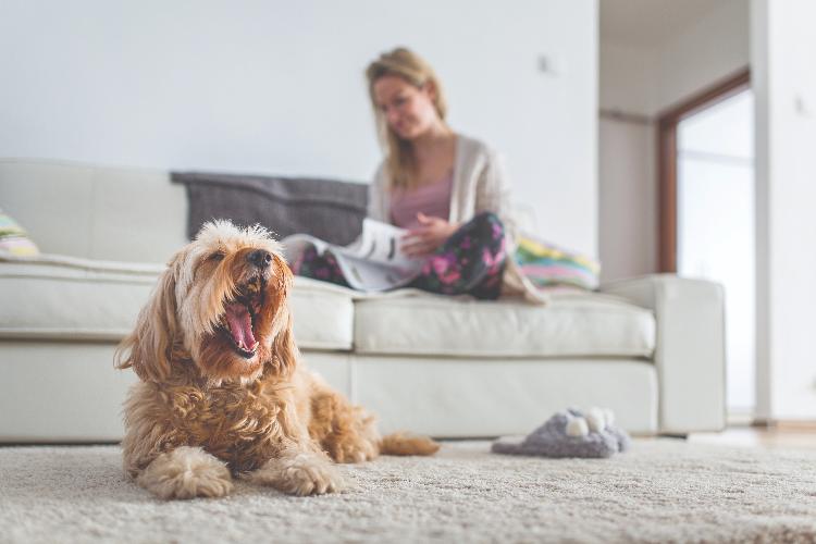 efectos-de-la-pandemia-en-los-propietarios-de-mascotas