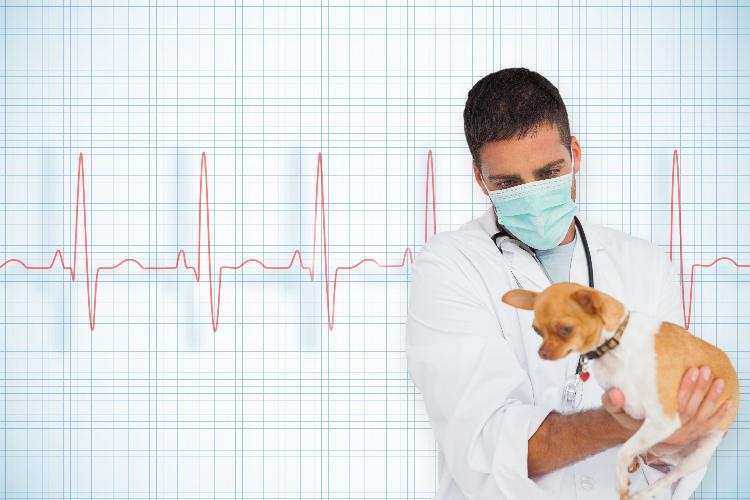 ceva-salud-animal-imparte-una-charla-virtual-sobre-radiografias-de-t