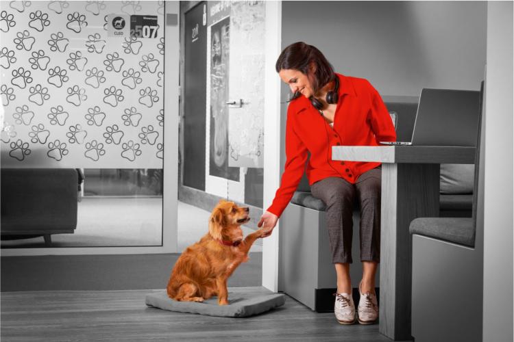 conoces-las-ventajas-de-llevar-a-tu-perro-al-trabajo