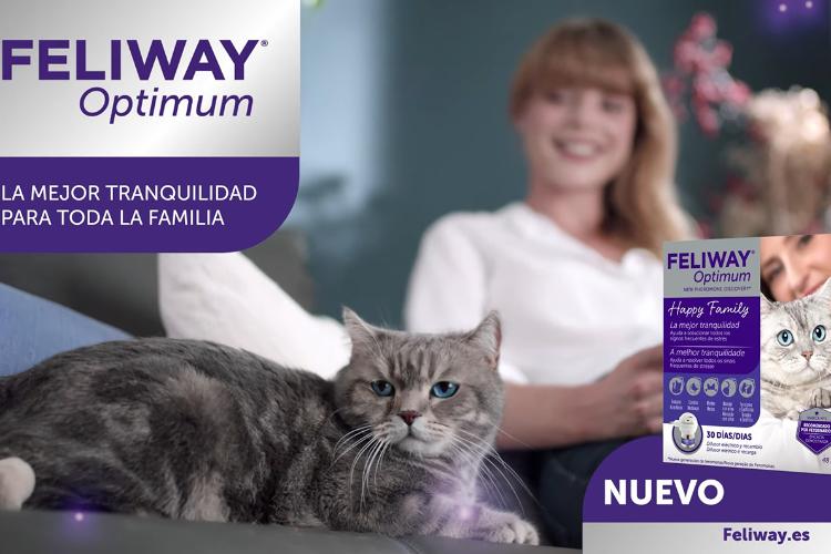 feliway-optimum-el-nuevo-complejo-de-feromonas-para-gatos-estrena-cam