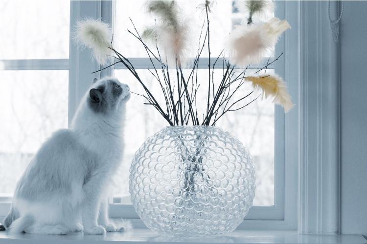 el-yodo-radiactivo-consigue-curar-al-95-de-gatos-con-hipertiroidismo