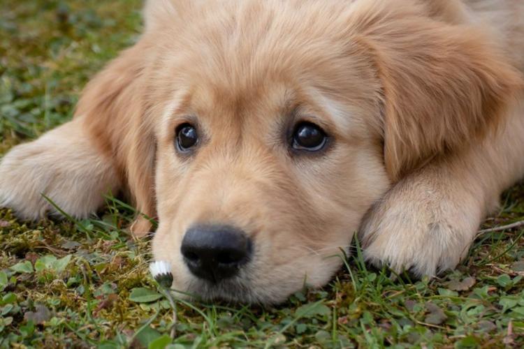 mas-de-la-mitad-de-los-perros-muestran-ansiedad-al-pasar-mas-tiempo