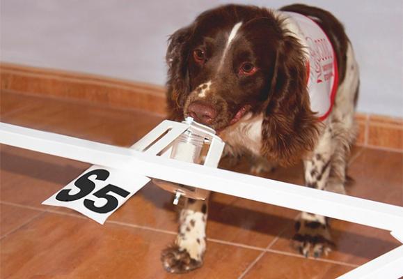 la aecc y la fe trabajaraacuten para la sentildealizacioacuten del caacutencer de proacutestata mediante el olfato canino
