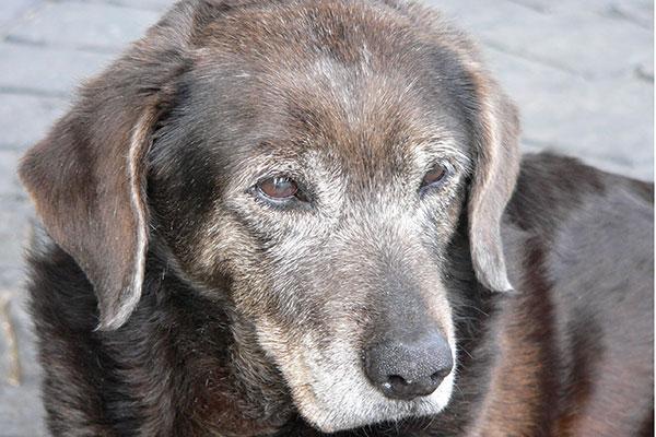 alimentacioacuten de perros y gatos en edad avanzada