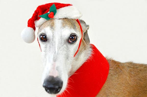 los alimentos de navidad un peligro para los perros