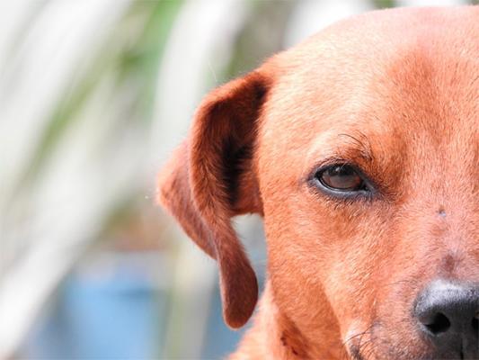 la ansiedad posible causa del pelo gris en los perros