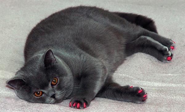 aumentan las peticiones de uso del seguro veterinario relacionadas con la obesidad de las mascotas