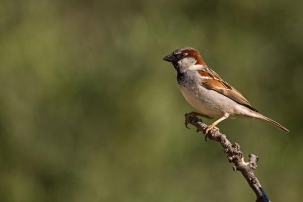 las aves mensajeras del cambio climaacutetico
