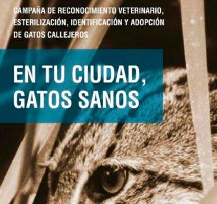 ayuntamiento de caacutediz kimba agaden y veterinarios renuevan la campantildea quoten tu salud gatos sanosquot