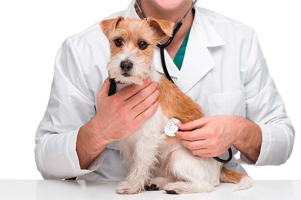 ciudadanos presenta una pnl para unificar la gestioacuten de los servicios veterinarios oficiales