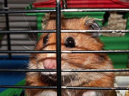 clausurada una tienda de perros y gatos en barcelona por infracciones de la ley de proteccioacuten de los animales