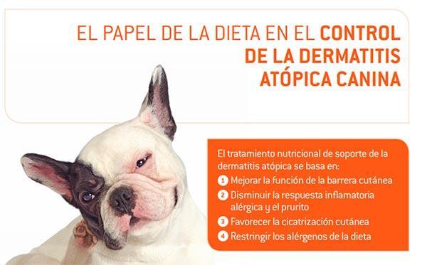 las claves de la demodex canis o demodicosis canina