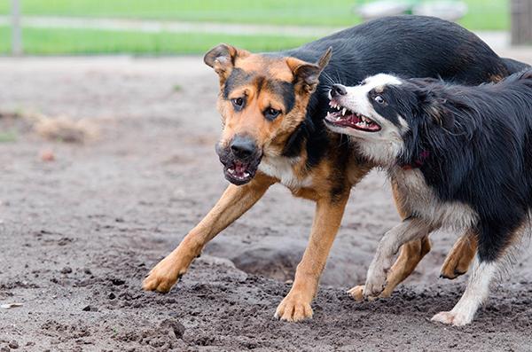 coacutemo actuar frente a una pelea de perros