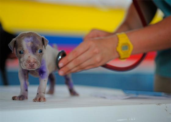 el colegio de veterinarios de sevilla denuncia un caso de intrusismo en los juzgados
