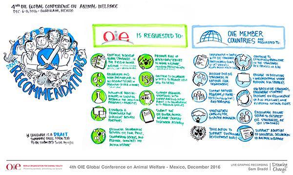 la iv conferencia mundial de la oie pone en el foco en la nueva estrategia mundial del bienestar animal