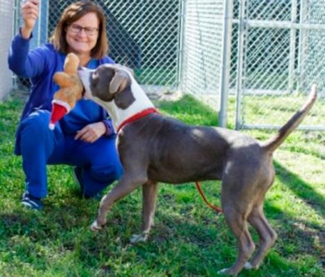 las consecuencias de identificar a un perro de raza pit bull y que no lo sea