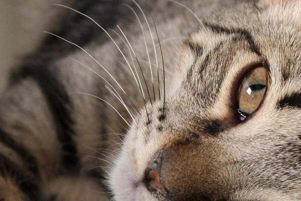 consejos para la llegada de un gato a casanbsp