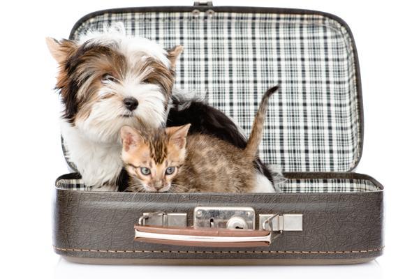 consejos para viajar con nuestras mascotas en semana santa