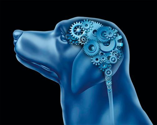 el uso de corticosteroides en el tratamiento de enfermedades neuroloacutegicas en pequentildeos animales