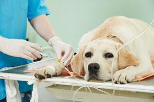 disentildean una escala multifactorial para evaluar maacutes faacutecilmente el grado de sedacioacuten en perros