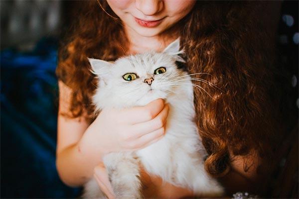 un estudio confirma que los gatos no dantildean la salud mental de los nintildeos