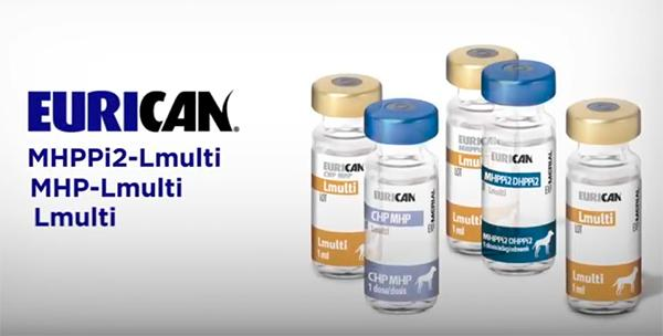 eurican de merial ofrece proteccioacuten cruzada frente a las principales variantes circulantes de parvovirus