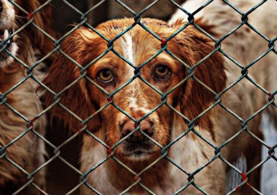 la fve exige acabar con el sufrimiento de los animales durante el transporte de larga distancia