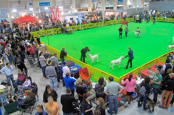 La Exposición Canina vuelve a IFEPA con un atractivo programa de concursos y exhibiciones