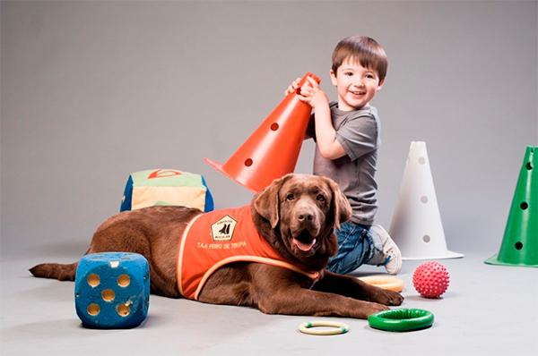 la facultad de veterinaria de tennessee estudiaraacute si la terapia con perros puede reducir la dosis de sedacioacuten en nintildeos sometidos a cirugiacutea