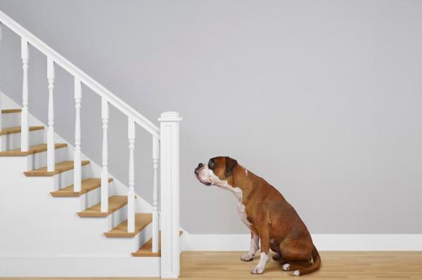 friacuteo y sedentarismo dos enemigos del perro