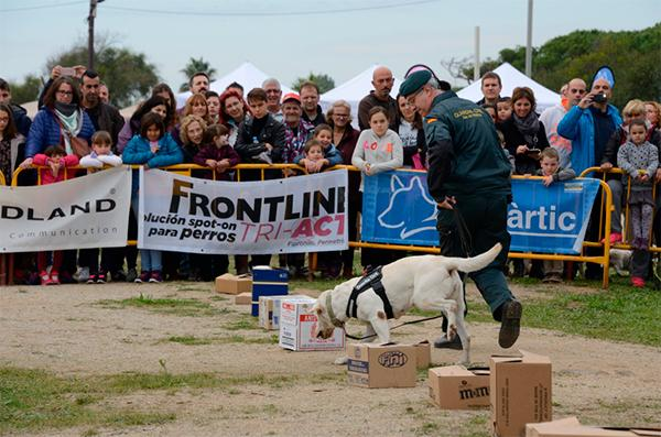 frontline tri act patrocina el dog day by gos agravertic