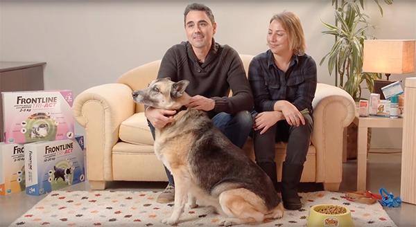 frontline triact patrocina el proyecto quotgrandes perros para grandes personasquot