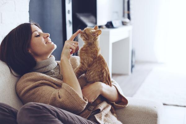 los gatos prefieren a las personas antes que a la comida