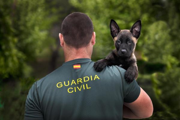 la guardia civil pone en marcha un programa de acogida temporal de cachorros de perros