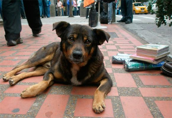 holanda demuestra que un mundo sin perros callejeros es posible